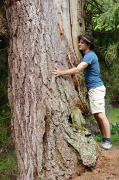 Artikel 8- Bäume als Heiler (6 von 8)
