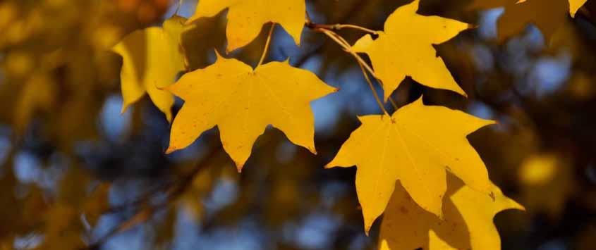 HerbstfärbungSamhain