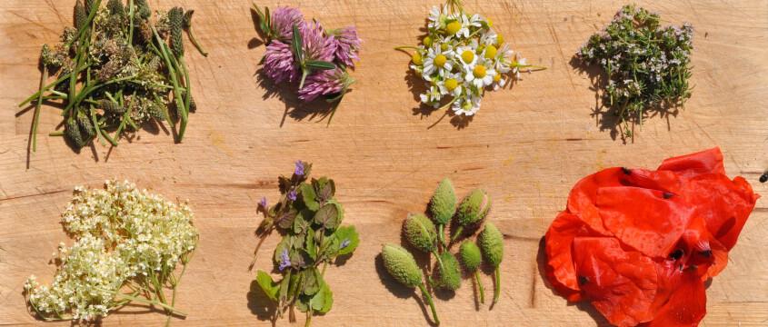 Heilkräuter aus dem eigenen Garten
