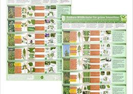 2er-Set-Essbare-Wildkraeuter-fuer-Gruene-Smoothies-DINA4-Erkennungskarten-Teil-1-2