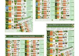 All-in-One-Paket-Wildkraeuter-Erkennungs-Karten-und-Poster-Teil-1-und-Teil-2