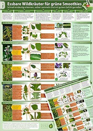 Essbare Wildkraeuter für Grüne Smoothies - Erkennungskarte Teil 2