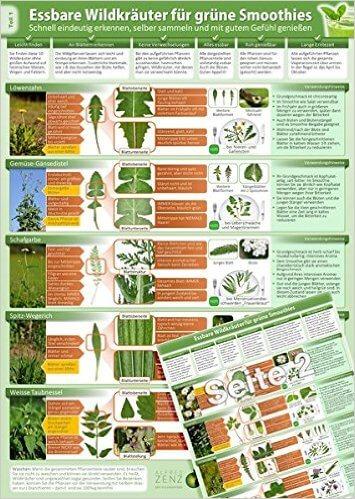 Essbare Wildkraeuter für Grüne Smoothies - Erkennungskarte Teil 1