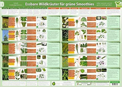 Essbare Wildkraeuter für Gruene Smoothies Teil 1 - Wandposter DINA2