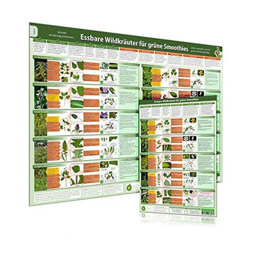 Kombiset-Teil-2-Essbare-Wildkraeuter-fuer-Gruene-Smoothies-Poster-DINA2-und-Erkennungskarte-DINA4