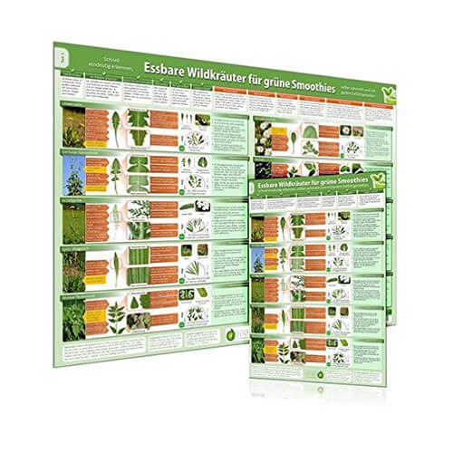 Kombiset-Teil1-Essbare-Wildkraeuter-fuer-Gruene-Smoothies-Poster-DINA2-und-Erkennungskarte-DINA4
