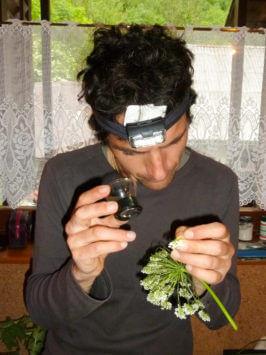 Alfred Zenz Jun. beim Bestimmen von Pflanzen
