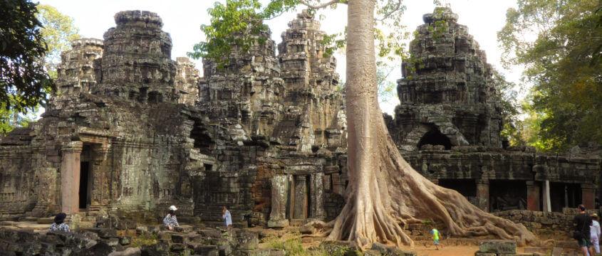 Tempel Bantey Kdei in Angkor, Kambodscha. Mit großem Thitpok-Baum (Tetrameles nudiflora)