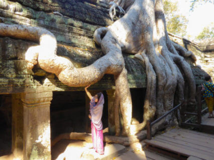 Wurzeln von des Thitpok-Baumes (Tetrameles nudiflora) im Tempel Ta Prohm in Angkor, Kambodscha